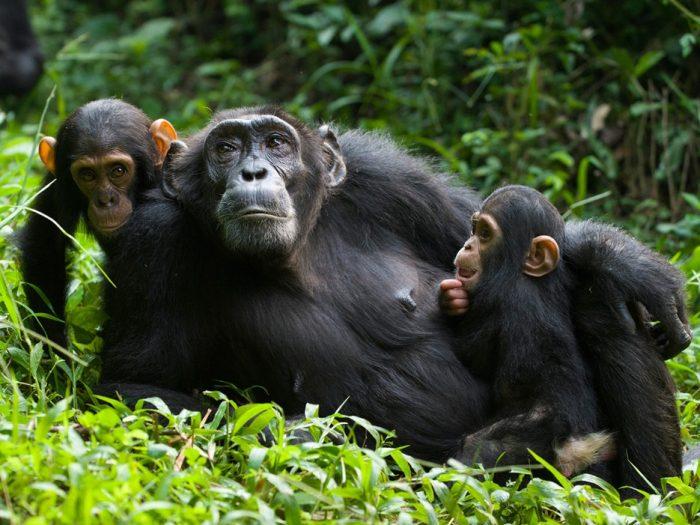 12 Days Active tour of Uganda
